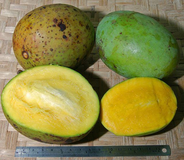 Cây muỗm,cây xoài hôi,quả muỗm,Mangifera foetida Lour,họ Đào lộn hột,Anacardiaceae