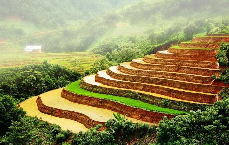 Cây lúa,lúa,Oryza sativa,Oryza glaberrima,họ hòa thảo,họ lúa,họ cỏ,Poaceae,cây lương thực,cây ngũ cốc,ngũ cốc,lục cốc,ruộng bậc thang,ruộng bậc thang Hoàng Su Phì