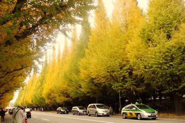 Đại lộ bạch quả ở Tokyo, Nhật Bản