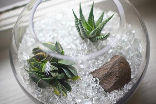 bình cây mini,bình cây nhỏ,bình cây tí hon,bình cây thủy tinh,cách làm bình cây mini,cách làm bình cây thủy tinh,cây cảnh mini,cây cảnh tí hon,terrarium