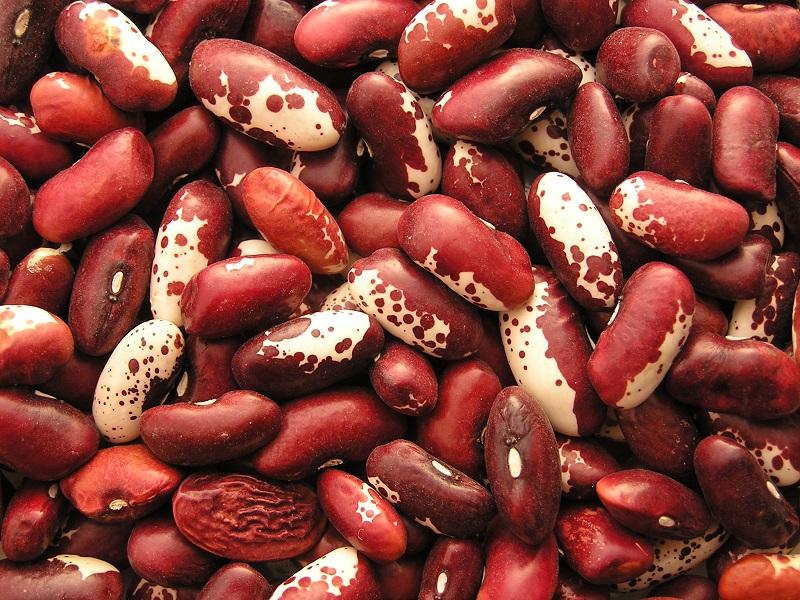 Đậu cô ve,đậu cove,đậu ve,đậu que,cô ve,cove,đậu a ri cô ve,các giống đậu cô ve,haricot vert,phaseolus vulgaris,họ đậu,fabaceae