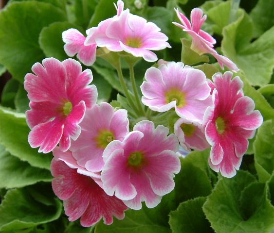Hoa Đẹp Anh Thảo