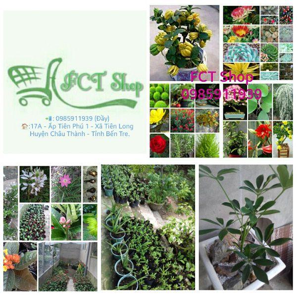 Cung cấp ngải giống quý hiếm chữa bệnh,cây ngải,cây thuốc,cây giống,ngải cầu tài,chữa bệnh,phong thủy,quý hiếm