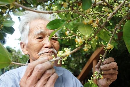 Ông Bồn mấy chục năm chăm sóc cây bạch mai