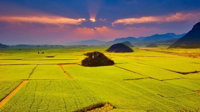 Cánh đồng hoa cải dầu ở Trung Quốc