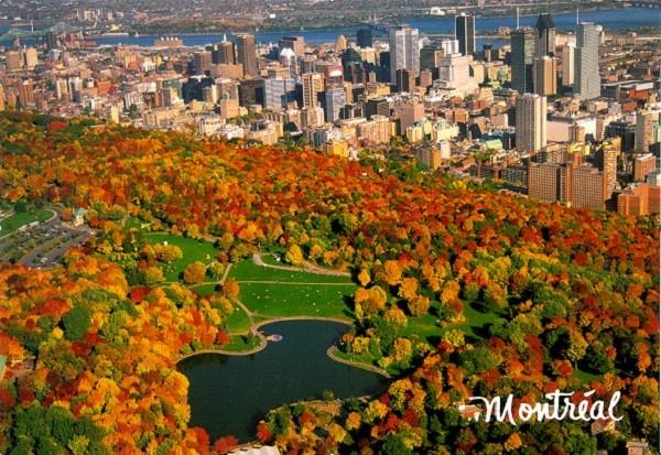 Cây Phong ở Montréal, Canada