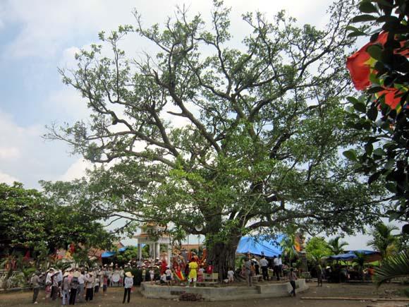 cây đa,cây đa sân đình và lễ hội