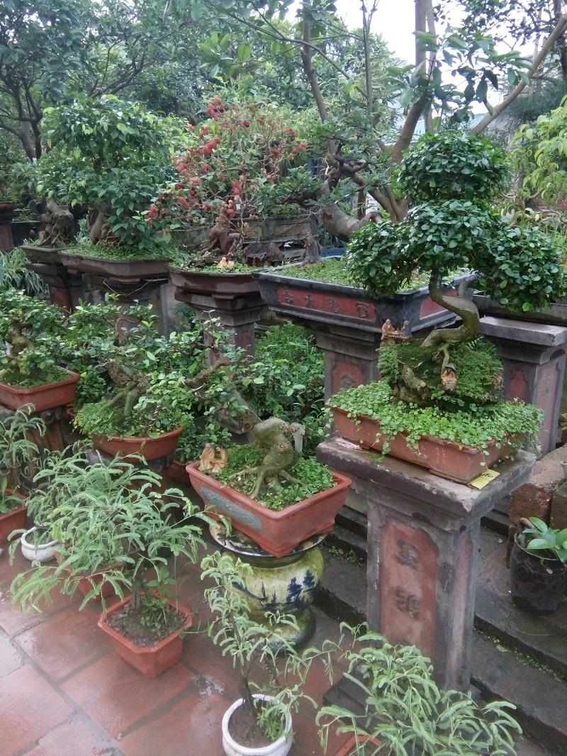 bán cây bon sai,sanh,sung,lộc vừng,đa,mua bán cây cảnh,hoa cảnh,sinh vật cảnh,hòn non bộ,Toàn quốc