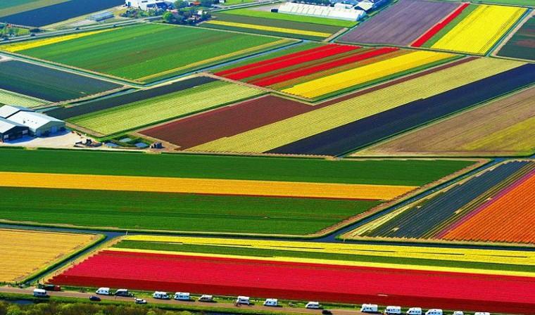 Cánh đồng hoa tulip Hà Lan Hà Lan