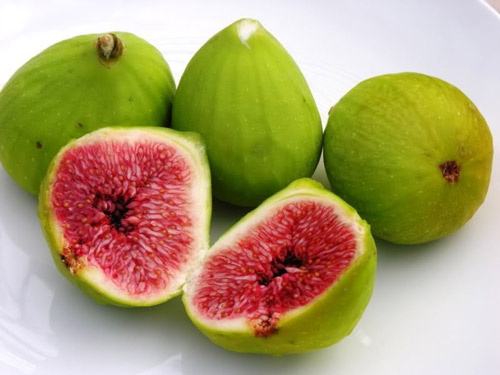 Cây sung,ưu đàm thụ,tụ quả dong,ficus racemosa,udumbara,ficus,ficus glomerata