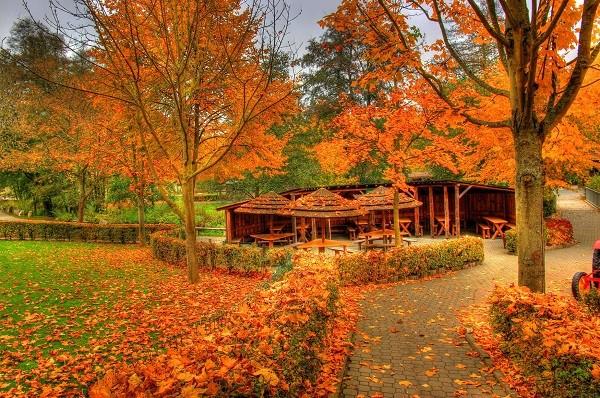 Cây phong ở Vermont, Mỹ