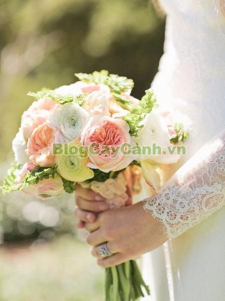 Cây Hoa Mao Lương (Cây hoa hoàng liên),cây hoa mao lương, cây hoa hoàng liên, hình ảnh cây hoa mao lương, Rananculus, họ Mao Lương, cay hoa mao luong