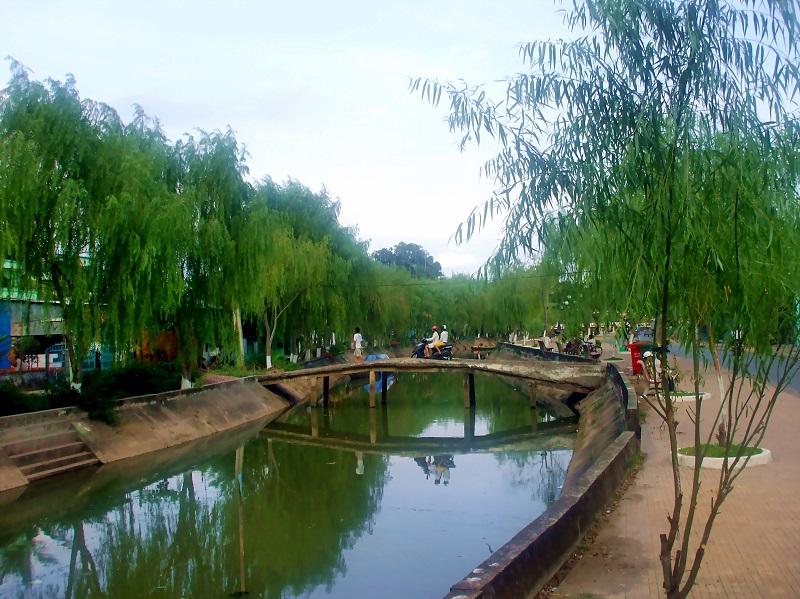 Chi liễu,cây liễu,các loài liễu,Salix,cây ngoại thất,cây phong cảnh,Liễu được trồng làm cảnh ở Sa Đéc, Đồng Tháp, Việt Nam