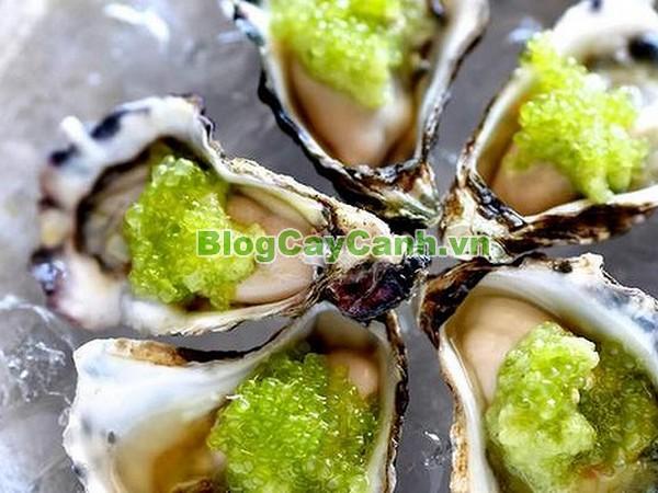 Cây Chanh Ngón Tay,cây chanh ngón tay,finger lime,Microcitrus australasica, chanh hình ngón tay, chanh ngon tay,trứng cá caviar,họ cam chanh,