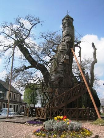 Nhà thờ cây sồi,cây sồi,cây sồi nghìn tuổi,nhà thờ độc đáo trên cây sồi,nhà thờ Chêne Chapelle,ngôi làng Allouville-Bellefosse