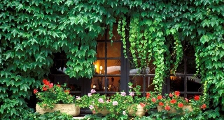 Không nên để cây cối phát triển, mọc tự do vì chúng sẽ làm biến mất nguồn khí tốt xung quanh nhà bạn.