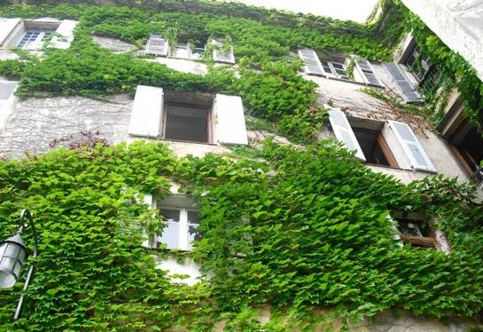 Vườn cây trên tường