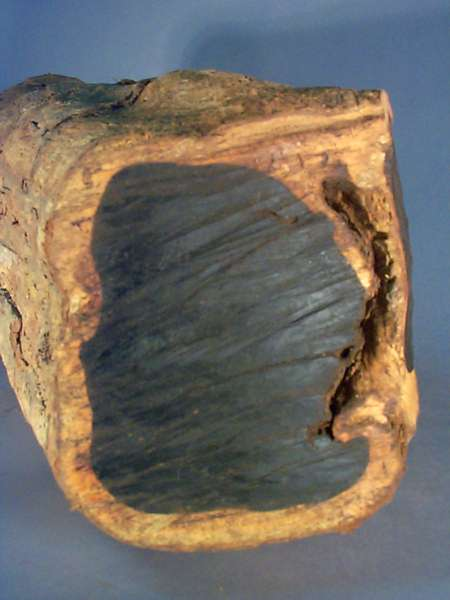 Cây gỗ mun,gỗ mun,mun,mun sừng,diospyros mun,họ thị,ebenaceae