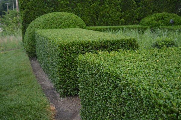 Cây cảnh sân vườn