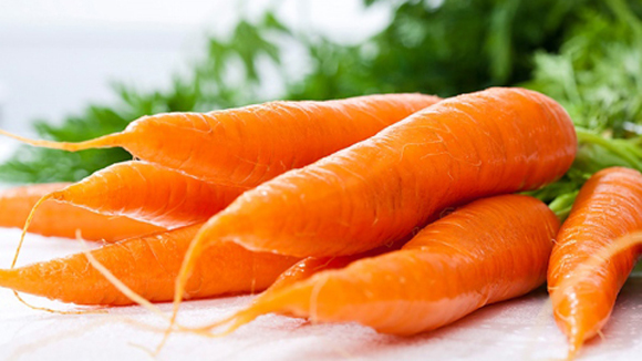 Cà rốt,cây cà rốt,củ cà rốt,carotte,aucus carota,sativus,cây thực phẩm