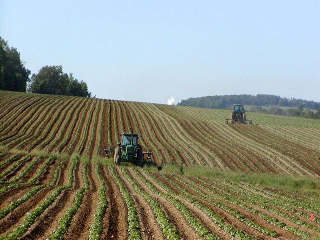 Một cánh đồng trồng khoai tây