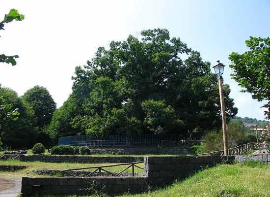 Cây hạt dẻ của một trăm kị sĩ (Italy),cây hạt dẻ lớn nhất thế giới,cây hạt dẻ nhiều tuổi nhất thế giới