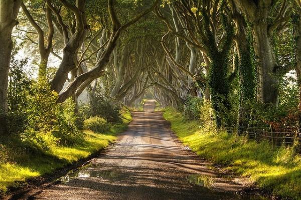 Hàng rào Trung cổ ở Bắc Ireland