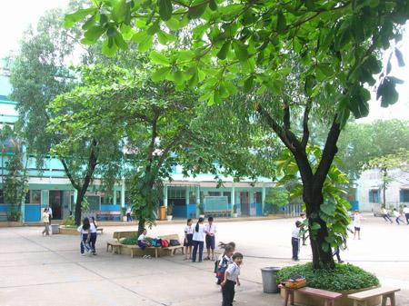 Cây bàng là cây được trồng nhiều ở sân trường học và đã trở nên thân thuộc với nhiều lứa tuổi học trò