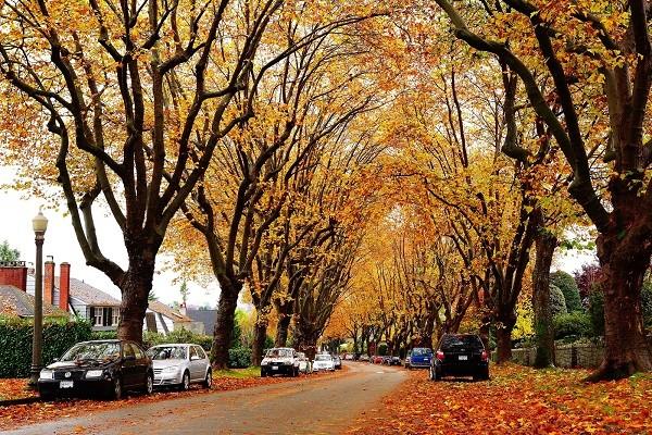 Đường phố ở Vancouver, Canada