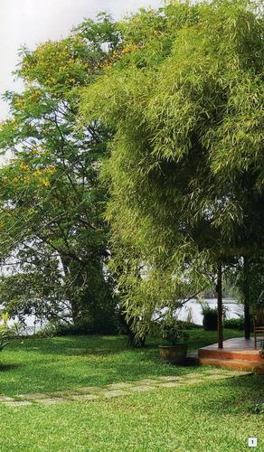 Cây xanh theo phong thủy