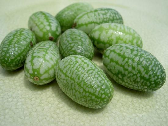 Dưa hấu tí hon,dưa hấu,dưa hấu nhỏ mexico,dưa hấu chuột,dưa chuột chua Mexico,Melothria scabra,Cucamelon,Pepquino,cây leo làm cảnh,cây leo ăn quả