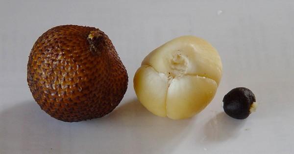 Salak,Salacca zalacca,quả da rắn