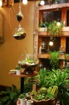 cây cảnh mini,cây cảnh tí hon,terrarium,nghệ thuật cây cảnh mini,nghệ thuật terrarium,trồng cây trong lọ thủy tinh,Thú chơi cây mini trong bình thủy tinh, nghệ thuật terrarium