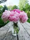 ý nghĩa các loài hoa theo phong thủy,hoa,cây cảnh,phong thủy,hoa mẫu đơn,hoa sen,hoa đào,hoa cúc,hoa lan,hoa thủy tiên,Ý nghĩa các loài hoa theo phong thủy