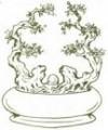 Thế cây Lưỡng long tranh châu,thế rồng,thế rồng phượng,sư tử hí cầu,thế cây,cây cảnh,Thế cây Lưỡng long tranh châu
