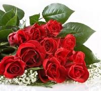 Hoa Hồng,hoa hong,hồng,hường,hoa hường,Rosa,rose,Rosaceae,hoa tình yêu,hồng gai,hồng đỏ,hồng trắng,hồng bạch,hồng nhung,hồng vàng,hồng phớt,hồng đậm,hồng thẫm,hồng cam,hồng viền trắng,hồng phấn,hồng tỉ muội,cây hoa,nữ chúa các loài hoa,hoa tường vi,Triparasundari,y nghia cua hoa hong,Hoa Hồng