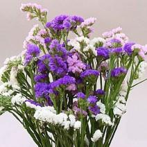 Hoa Salem (Limonium sinuatum)