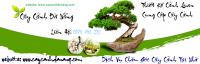 caycanhdanang.com,cây cảnh đà nẵng,cay canh da nang,mua bán cây cảnh,hoa cảnh,sinh vật cảnh,hòn non bộ,TP Đà Nẵng,Nhận chăm sóc cây cảnh, trồng cây sần vườn, biệt thự, công trình, resort, mua bán cây cảnh tại Đà Nẵng, Quảng Nam, thiết kế sân vườn tại Đà Nẵng