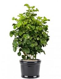 cho thuê cây cảnh,cho thuê cây cảnh văn phòng,mua bán cây cảnh,hoa cảnh,sinh vật cảnh,hòn non bộ,Toàn quốc,Cho thuê cây cảnh văn phòng
