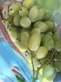 trái cây,mua bán cây cảnh,hoa cảnh,sinh vật cảnh,hòn non bộ,Toàn quốc,Bái trái cây nhập khẩu và trái cây quê ở Đà Nẵng