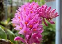 lan rừng Đồng Nai,lan rừng,mua bán cây cảnh,hoa cảnh,sinh vật cảnh,hòn non bộ,Toàn quốc,Lan rừng Đồng Nai