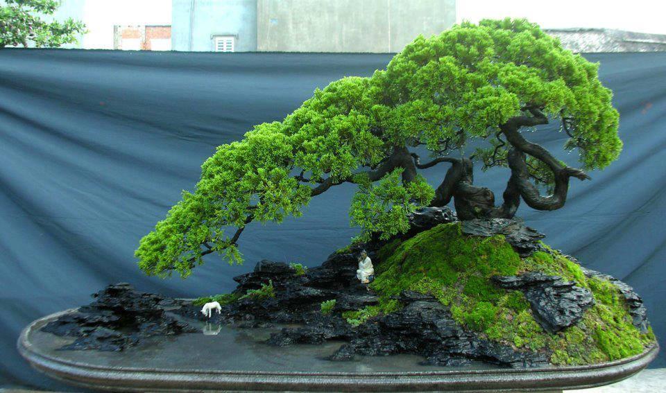 Японское искусство выращивания карликовых деревьев 67