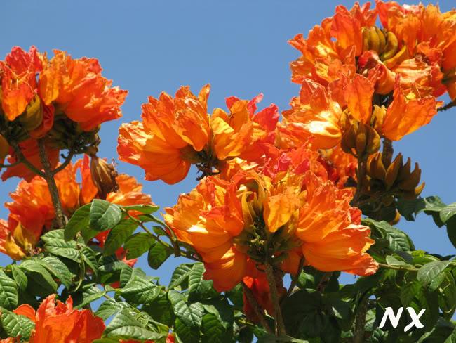 Kết quả hình ảnh cho cây sò đo cam