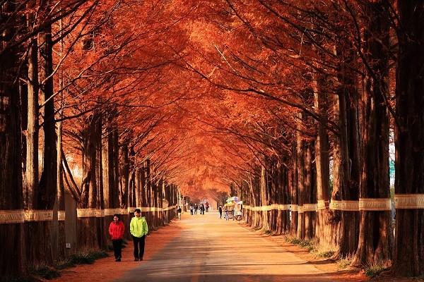 Con đường Thủy sam, Hàn Quốc