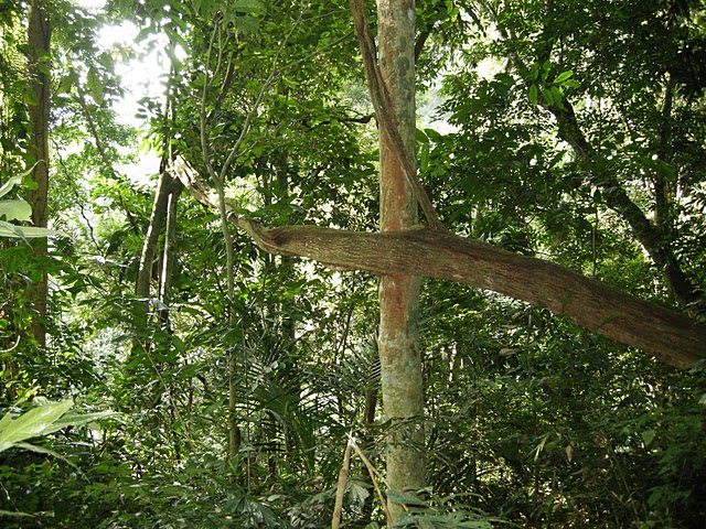Rừng Cúc Phương - Dây bàm bàm dài 2 km ở Vườn quốc gia Cúc Phương