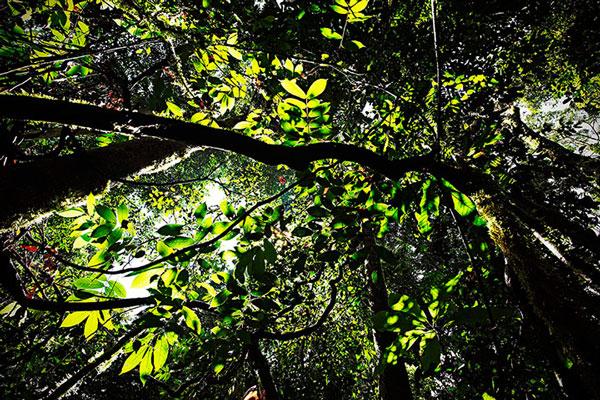 Rừng nhiệt đới ở Danum Valley Par trên đảo Borneo, Malaysia