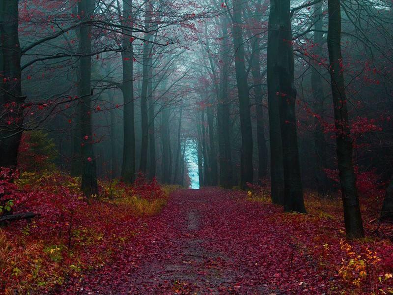 Rừng Đen ở Đức