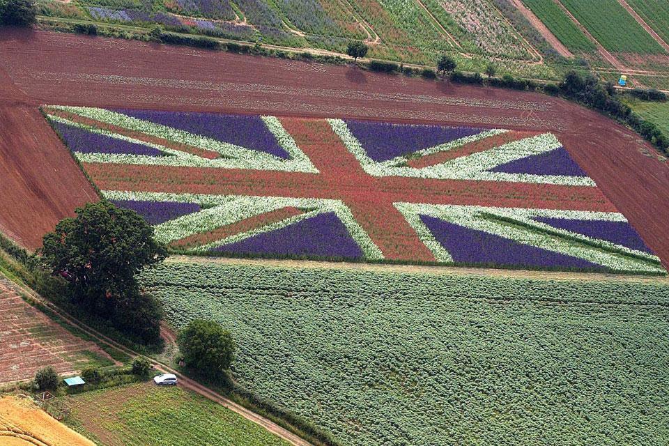 Cánh đồng hoa Phi Yến ở ngoại ô nước Anh