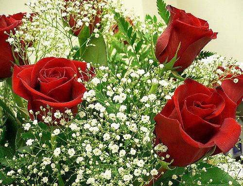 Hoa baby,baby,hoa chấm bi,Baby's breath,ý nghĩa của hoa baby,Gypsophila,Gypsophila paniculata,họ cẩm chướng,Caryophyllaceae,Happy Festival,Festival star,hoa tình yêu,hoa tình nhân
