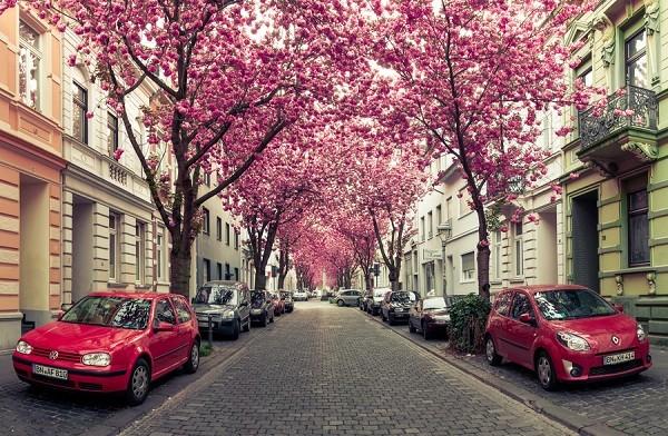 Đường hoa anh đào ở Đức